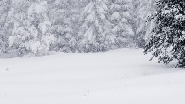 vidéos et rushes de pov, vlogging dans un paysage d'hiver de neige blanche. - cristaux