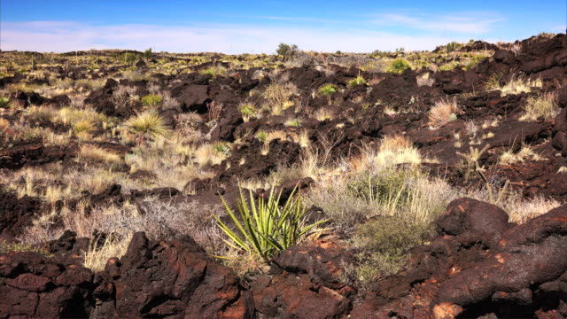volcanic landscape at valley of fires recreation area in new mexico - tropical bush stock videos and b-roll footage