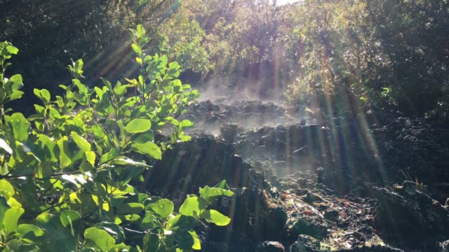 Volcanic Steam in Rangitoto Island New Zealand