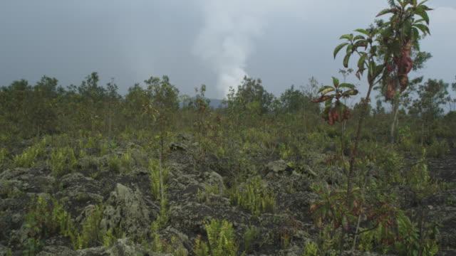 vídeos y material grabado en eventos de stock de volcano smoking, vegetation in foreground, nyamuragira, democratic republic of congo, 2011 - volcán activo