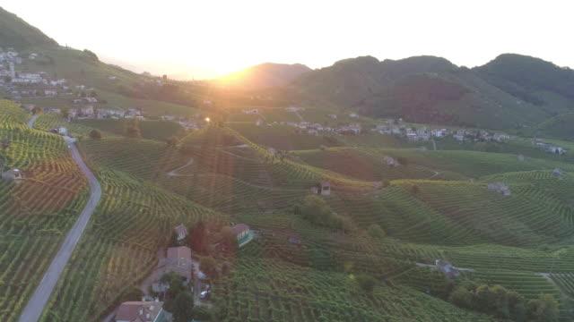 volo sulle colline del prosecco - grape leaf stock videos & royalty-free footage