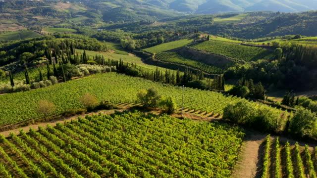 volpaia vineyards in chianti wine region, tuscany, italy - italian culture stock videos & royalty-free footage