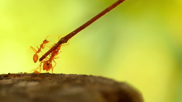 volunteer ant help friend - strength stock videos & royalty-free footage