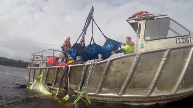 volunteer at australia's... - pilot fish stock videos & royalty-free footage