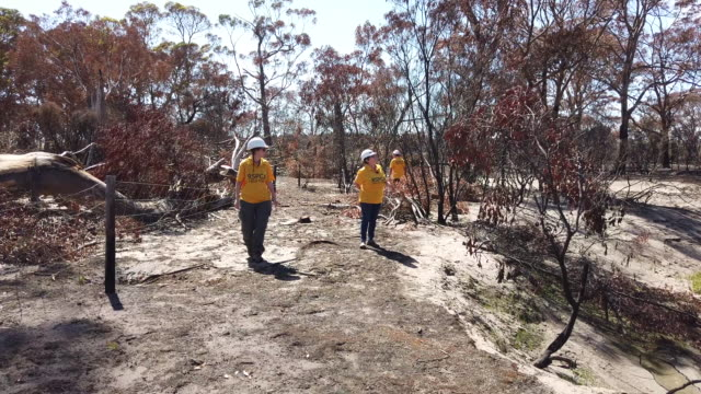 volunteer field team lance strudwick, emma linsenmeier and merril hansen from rspca south australia survey for wildlife and set up feeding stations... - recovery stock videos & royalty-free footage