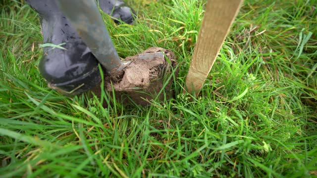 volunteer planting a tree ahead of national tree week community volunteers and thames 21 employees plant a range of oak, holly, birch, ferns, willow,... - footpath stock videos & royalty-free footage