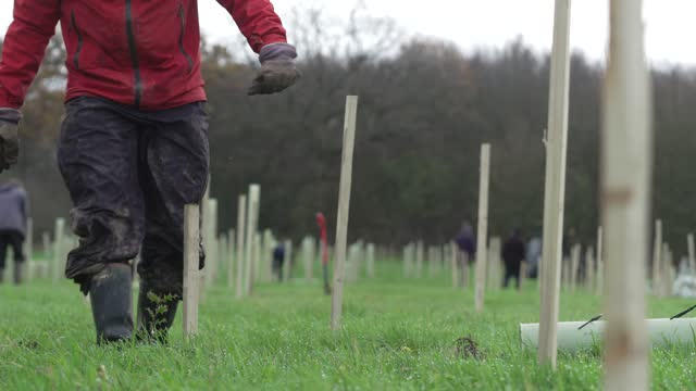 volunteer planting a tree ahead of national tree week community volunteers and thames 21 employees plant a range of oak, holly, birch, ferns, willow,... - forest stock videos & royalty-free footage