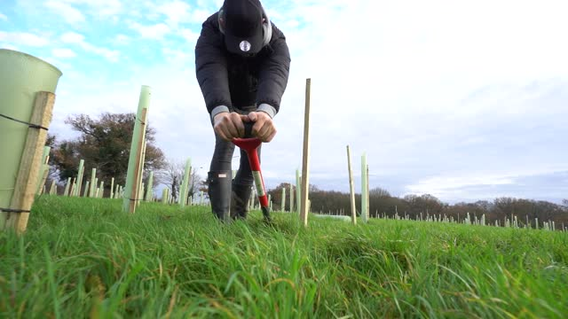 volunteer planting a tree ahead of national tree week community volunteers and thames 21 employees plant a range of oak, holly, birch, ferns, willow,... - slow stock videos & royalty-free footage