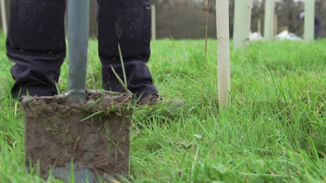 volunteer planting a tree ahead of national tree week community volunteers and thames 21 employees plant a range of oak, holly, birch, ferns, willow,... - pedestrian walkway stock videos & royalty-free footage