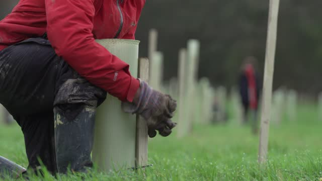 volunteer planting a tree ahead of national tree week community volunteers and thames 21 employees plant a range of oak, holly, birch, ferns, willow,... - planting stock videos & royalty-free footage