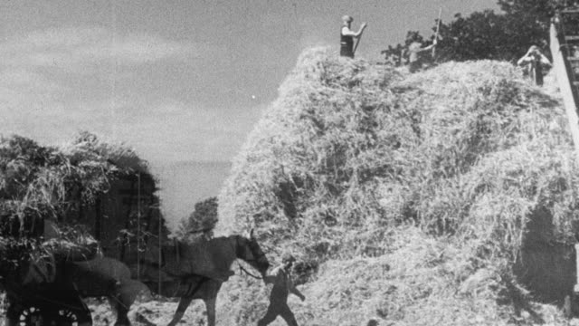 1942 montage volunteers from the city and the armed forces volunteering and harvesting grain on a farm during world war ii / united kingdom - war stock videos and b-roll footage