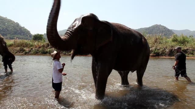Volunteers helping  elephant bath in  river at  Elephant Nature Sanctuary / Chaing Mai, Chiang Mai, Thailand