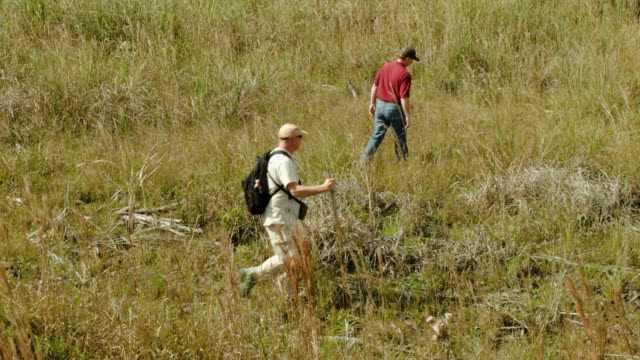 Volunteers hunt for Northern African rock pythons and other nonnative snakes in the Florida Everglades on January 29 2015 in Miami Florida The...