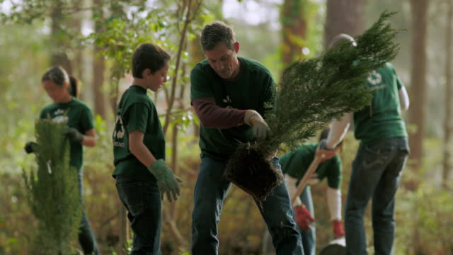 volunteers planting trees - zona arborea video stock e b–roll