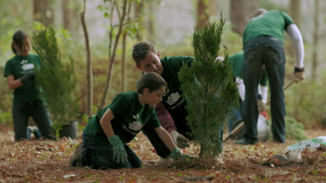 volunteers planting trees - baumbestand stock-videos und b-roll-filmmaterial