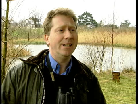 vidéos et rushes de vox pops birdwatchers sot tms tcms ruddy ducks swimming on water and preening tx 132003/c4n clean feed tape = d0617021 or d0617022 002223 to... - se lisser les plumes
