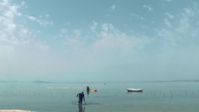 """wading knee-deep in the calm waters of a lagoon, workers in northern tunisia harvest red seaweed, in a nation dubbed a mediterranean """"trailblazer"""" in... - seaweed stock videos & royalty-free footage"""