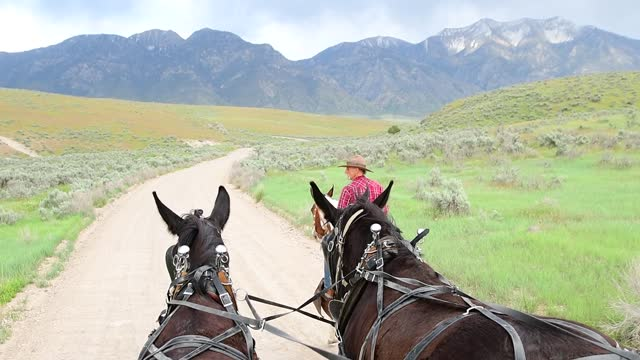wagon point of view of horses and rearview of cowboy in utah - horse stock videos & royalty-free footage
