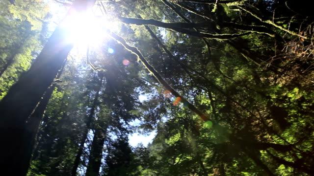 vídeos y material grabado en eventos de stock de cascadas de wahkeena sendero detalle - cascadas de multnomah