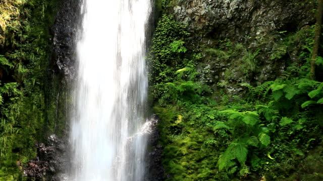 vídeos y material grabado en eventos de stock de cascadas de wahkeena sendero de la cascada detalle - cascadas de multnomah