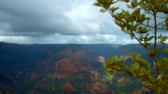 waimea canyon and tree kauai hawaii - tropical tree stock videos & royalty-free footage