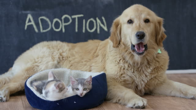 waiting for a forever home - dog and cat stock videos and b-roll footage
