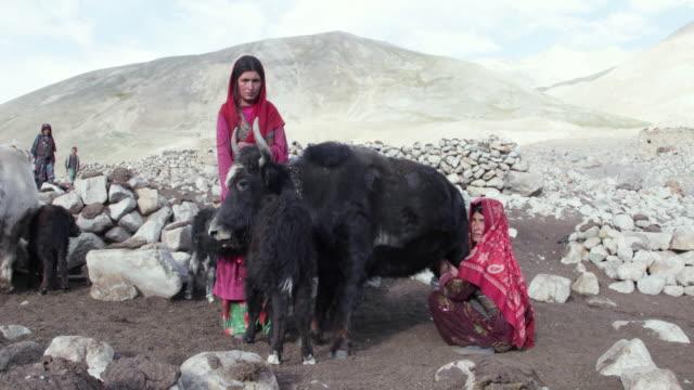 wakhi nomad woman milking a yak, big pamir, wakhan, afghanistan on august 11, 2016 in wakhan, afghanistan. - nomadic people stock videos & royalty-free footage