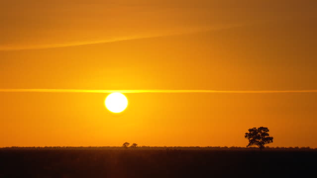 Walgett district outback early morning sun and pastel yellow sky over barren outback plain with isolated gum tree