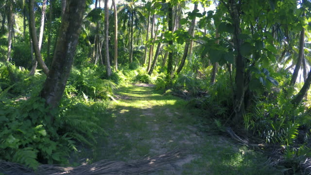 a walk along a tropical forest path - guam stock videos & royalty-free footage