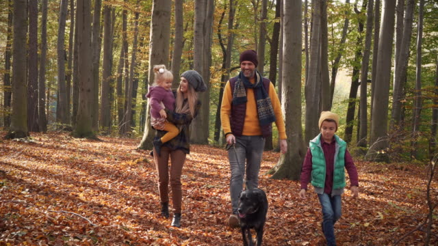 stockvideo's en b-roll-footage met walk/ debica/ poland - herfst