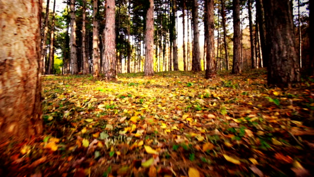 walk in a forest. - toned image stock videos & royalty-free footage