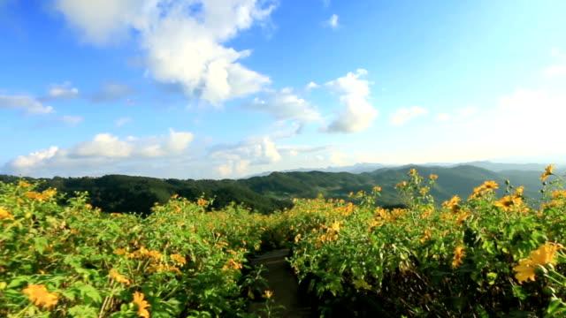 Gehen Sie auf mexikanische Sonnenblume-Feld in Mae-Hong-Son-Thailand