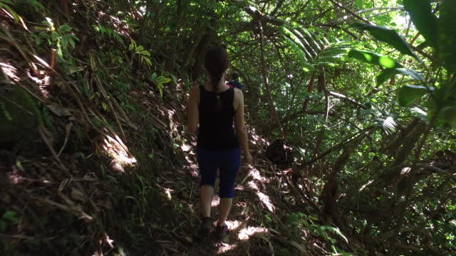 walk in the tropical forest - moorea stock videos and b-roll footage