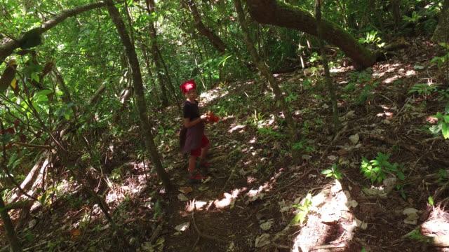 vídeos de stock, filmes e b-roll de walk in the tropical forest - árvore tropical