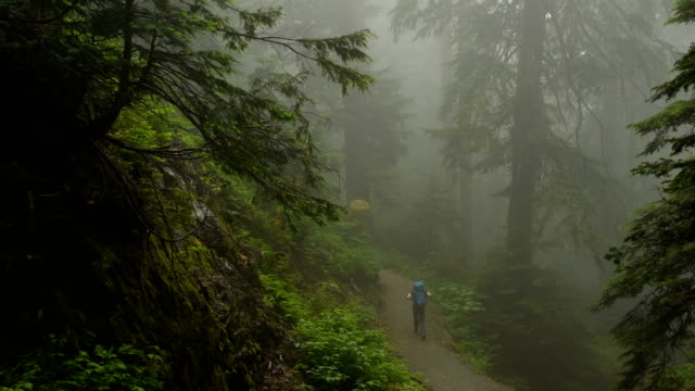 walk in the woods - vancouver canada stock videos and b-roll footage