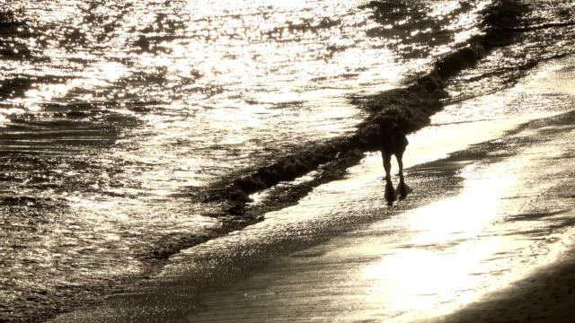 walk on the sandy beach at sunset, atlantic coast, portugal - mos stock videos & royalty-free footage