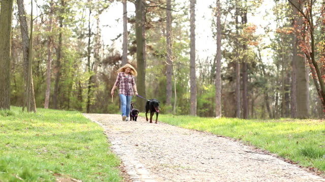 walk the dogs in the park - dog walker stock videos and b-roll footage