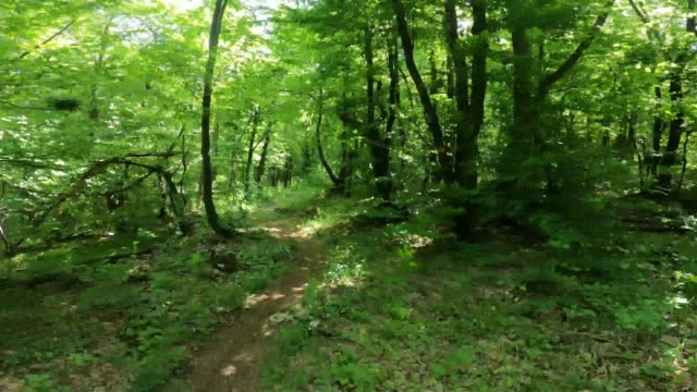 a walk through a lush green forest - woodland stock videos & royalty-free footage