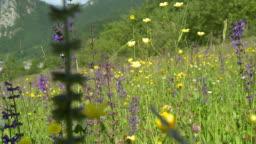 HD SLOW-MOTION: Walk through meadow
