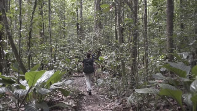 POV walk through rainforest path