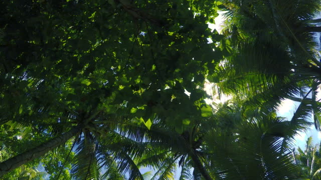 a walk under a palm tree canopy - guam stock videos and b-roll footage