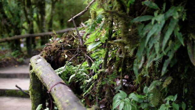 stockvideo's en b-roll-footage met weg te lopen in het bos - gymbroek