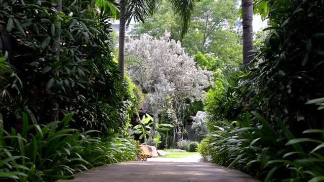 walk way in the garden - lawn stock videos & royalty-free footage