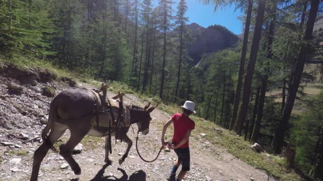 vídeos y material grabado en eventos de stock de walk with a donkey - burro