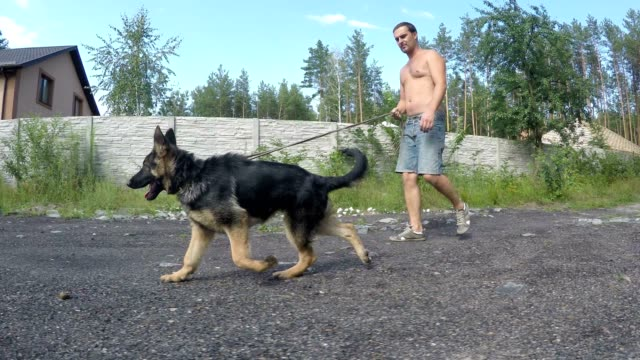 Walk with a puppy of a German Shepherd.