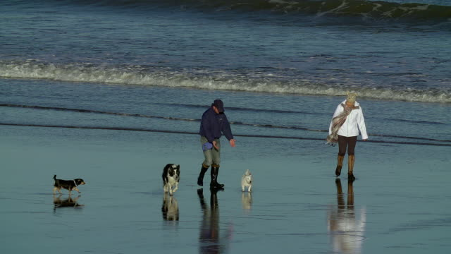 stockvideo's en b-roll-footage met walking 3 dogs on beach slow motion scarborough north yorkshire - scarborough engeland