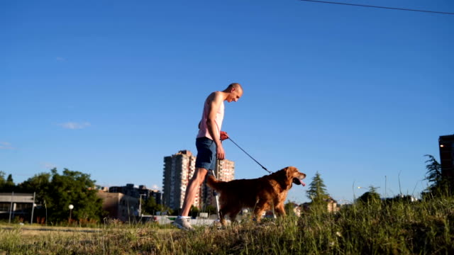 walking a dog on a sunny day - racewalking stock videos and b-roll footage