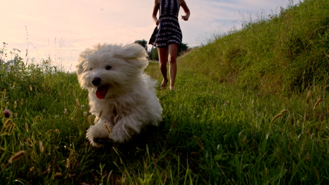 slo mo walking a dog - dog stock videos & royalty-free footage