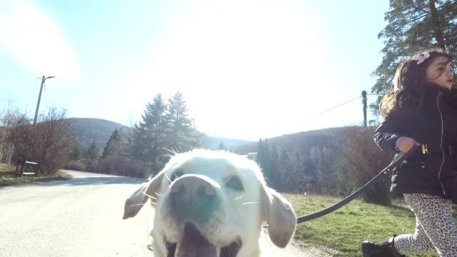 vídeos de stock e filmes b-roll de passear um cão - trela de animal de estimação