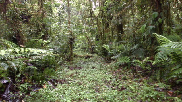 Walking along a path in cloud forest at 2200m elevation in the Ecuadorian Andes.